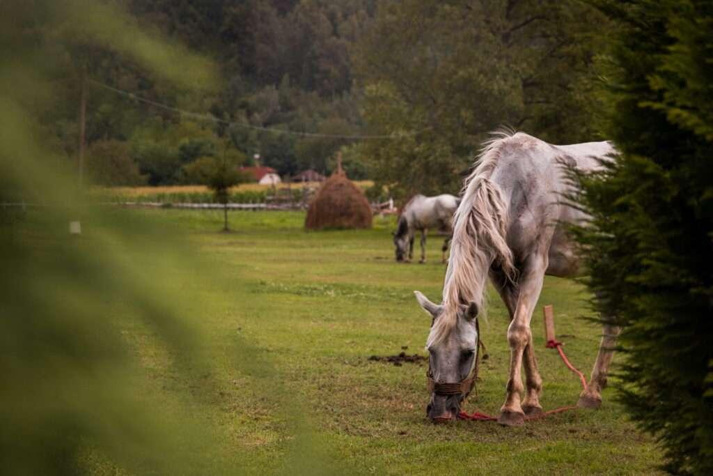 livada i konji