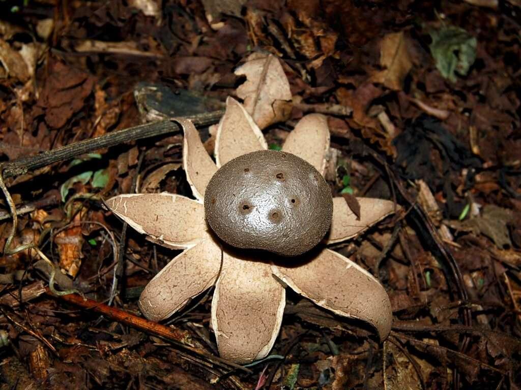 najlepša gljiva